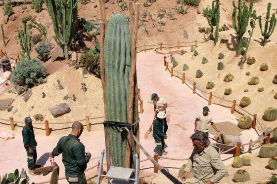 Le Pachycereus Pringlei, cactus géant pouvant atteindre 19 mètres de hauteur