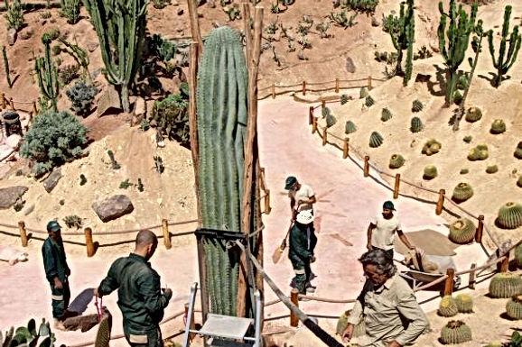 Croco Parc d'Agadir : un cactus géant qui peut atteindre 19 mètres de hauteur