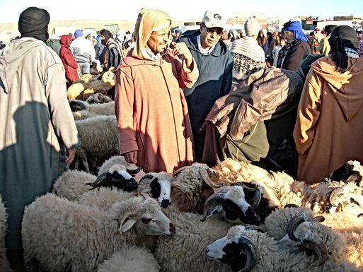 Les moutons de l'Aïd au marché aux dromadaires de Guelmim