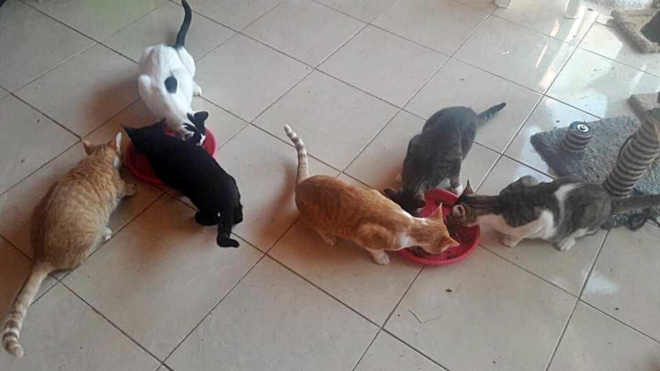 Le chat Baguerra et ses copains.