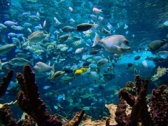 La Cité des mers d'Agadir devrait comprendre un aquarium comparable à celui de Cherbourg, en France