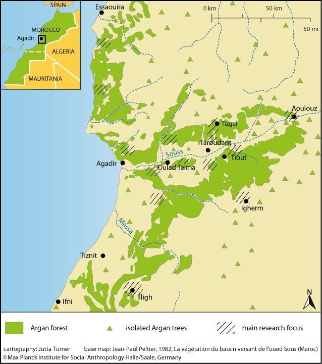 20'000 graines d'arganiers plantées dans la Réserve de biosphère du Souss Massa