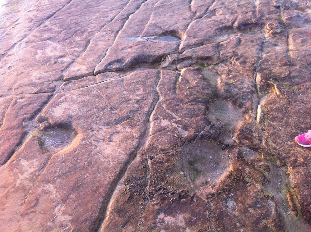 Site d'Anza : plus de 300 empreintes et 56 cheminements de dinosaures