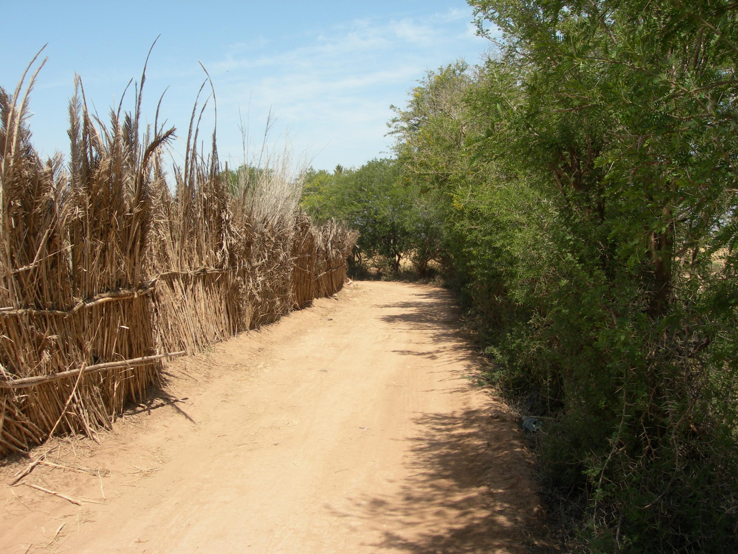 Chemin du Mimosa