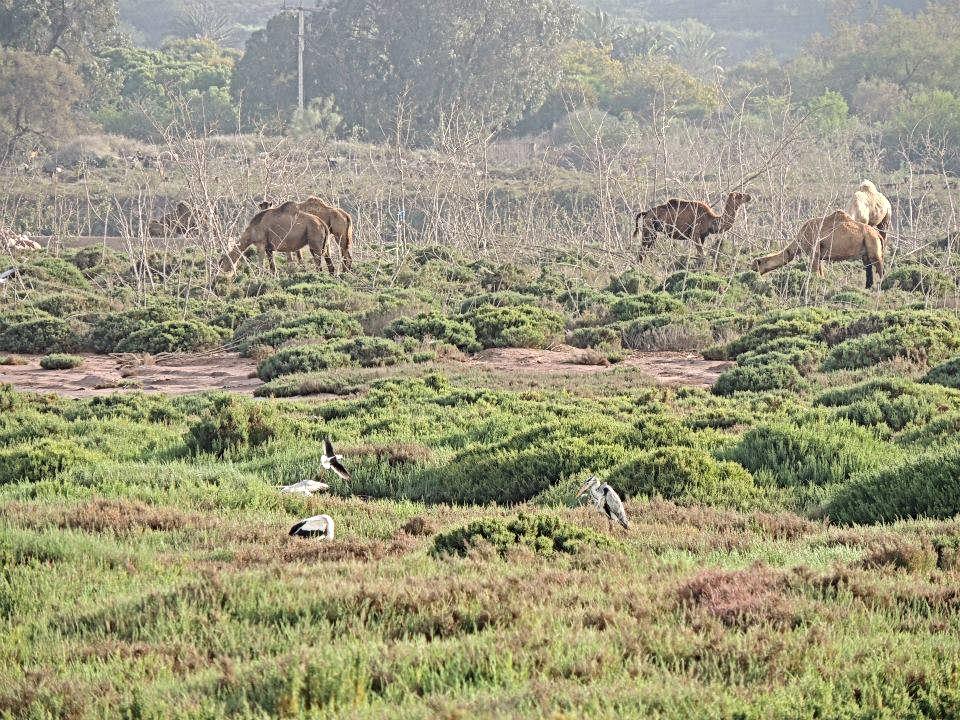 Agadir : jolie balade dans la nature et loin de la foule à l'embouchure de l'oued Souss