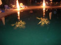 Reflets des palmiers dans la piscine
