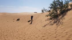 Tajine dans le sable