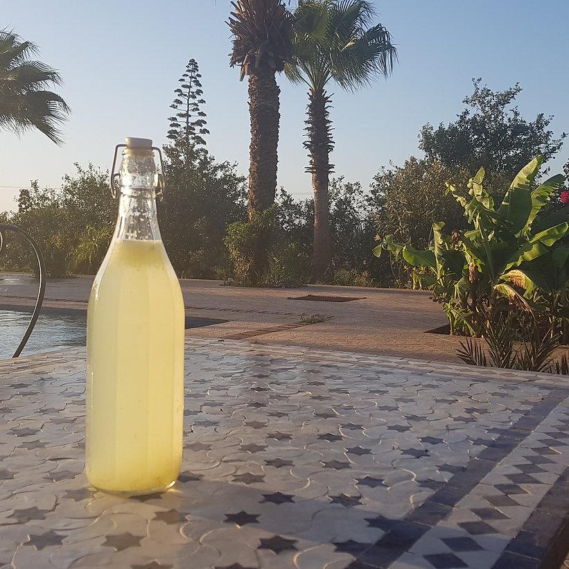 """Nous avons inventé le """"Champagne d'Ouled Alioua"""" favorable au climat !"""