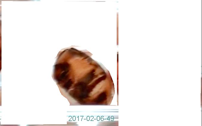 2017-02-06-49a