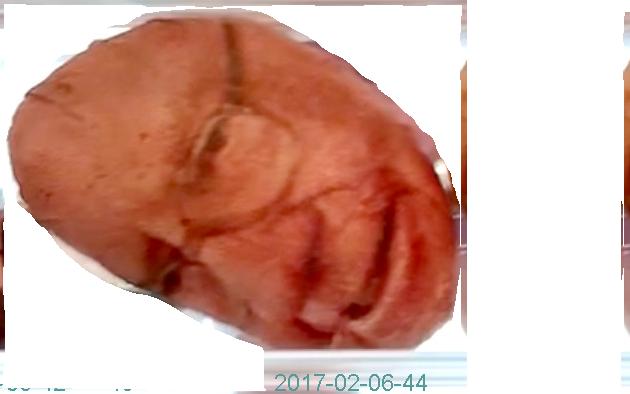 2017-02-06-44