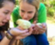 chicken coop project.jpg