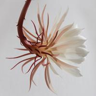 Hanging fleur blanche
