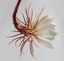 Hanging White Flower