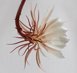 Colgando de la flor blanca