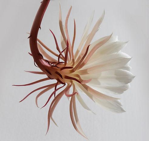 ハンギング白い花
