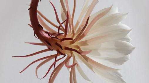 Hengende White Flower
