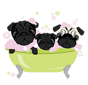 3-PUGS-IN-A-TUB.png