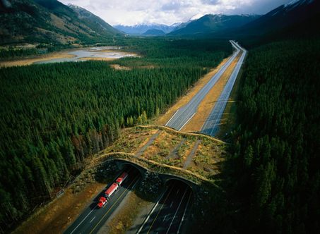 How Wildlife Bridges Over Highways Make Animals—and People—Safer