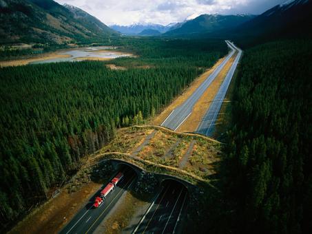 How Wildlife Bridges Over Highways Make Animals—and People—Safer