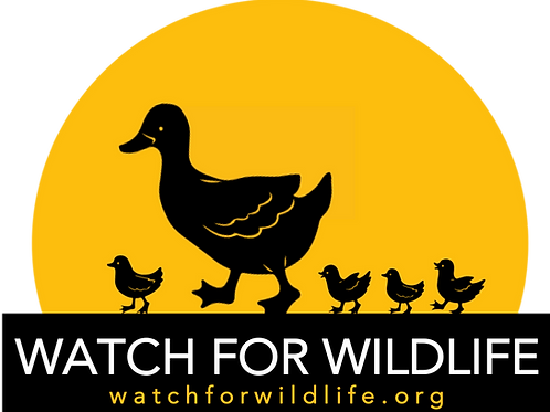Watch For Wildlife with Duck Family (size: 5x7)