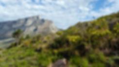 Table_Mountain_yellowflowers.jpg