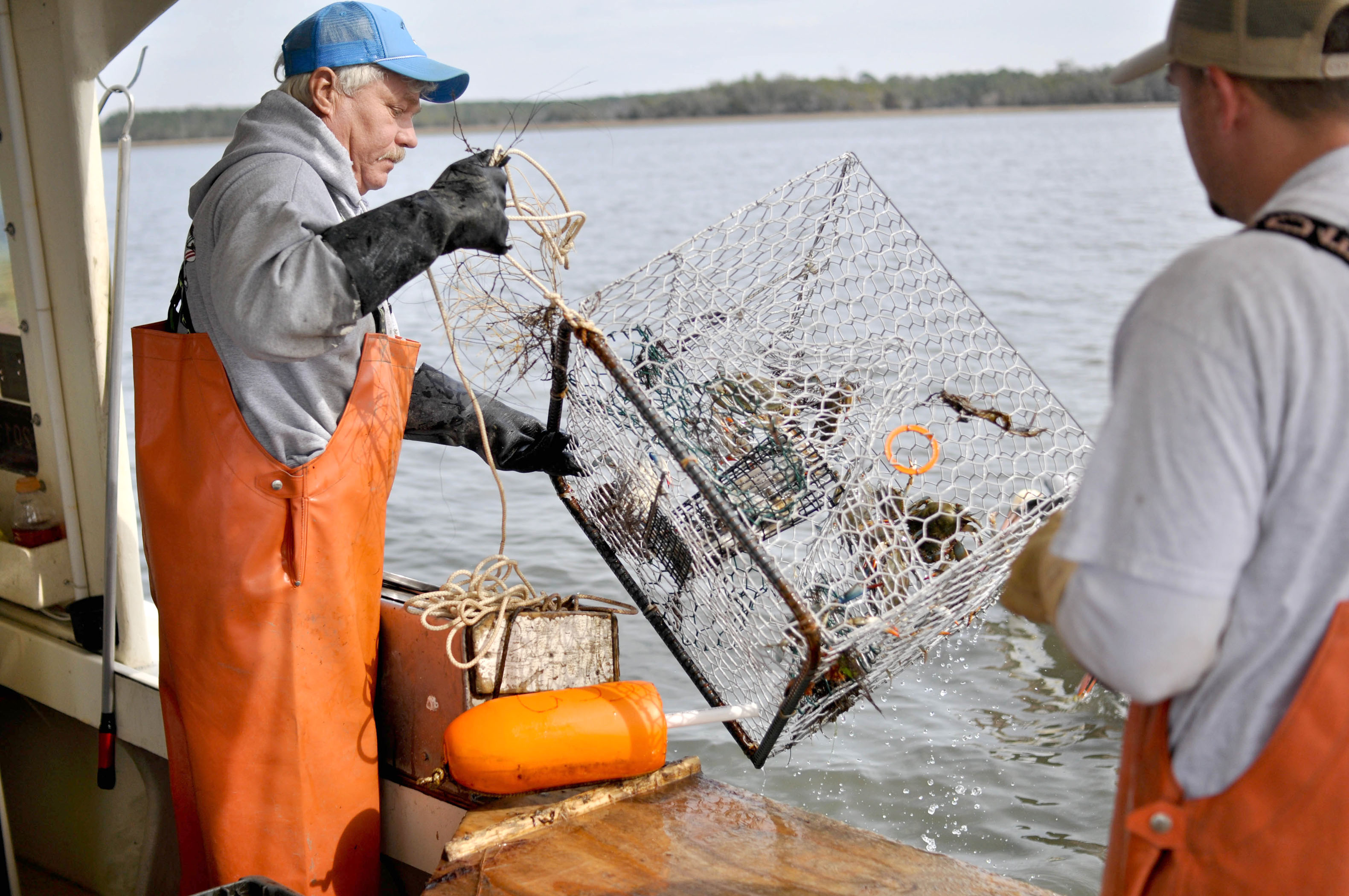 Pulling in Crabs from Ocean Image