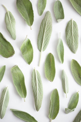 Sage-leaves-on-white-background_©Cameron