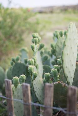 Cactus on the Beach
