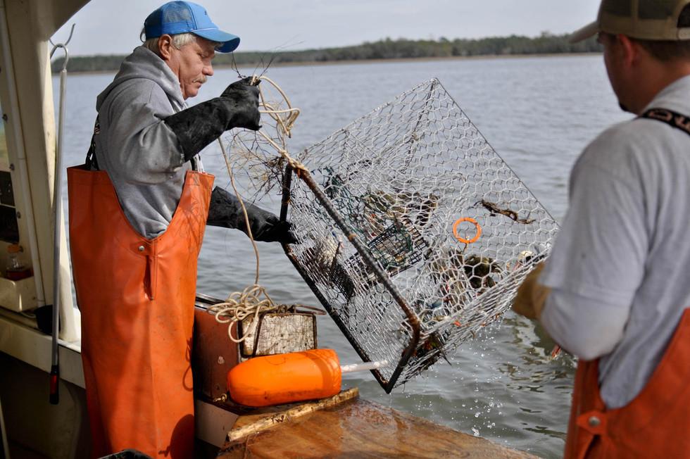 Fishermen-in-Charleston-SC-pull-in-crab-