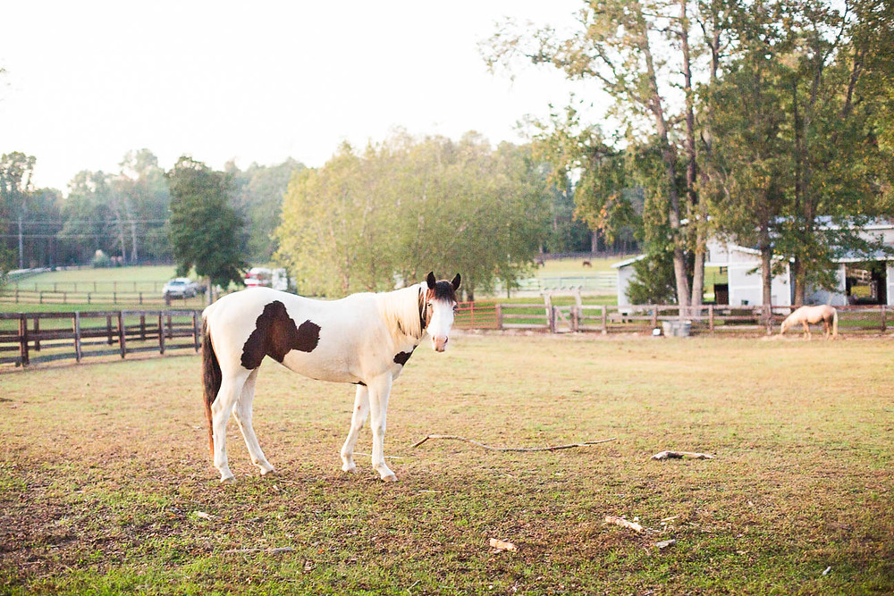 horse on family farm in Raleigh, NC