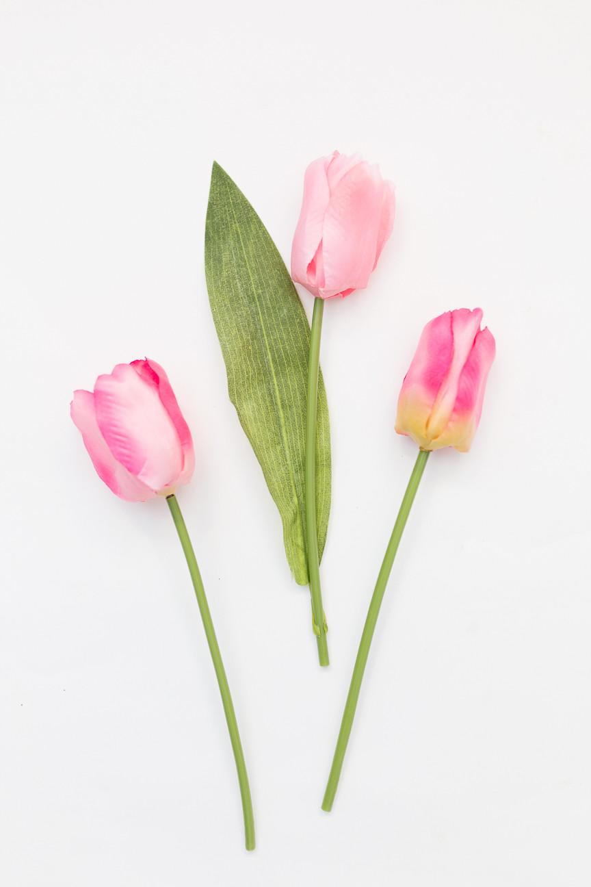 image of three pink tulips