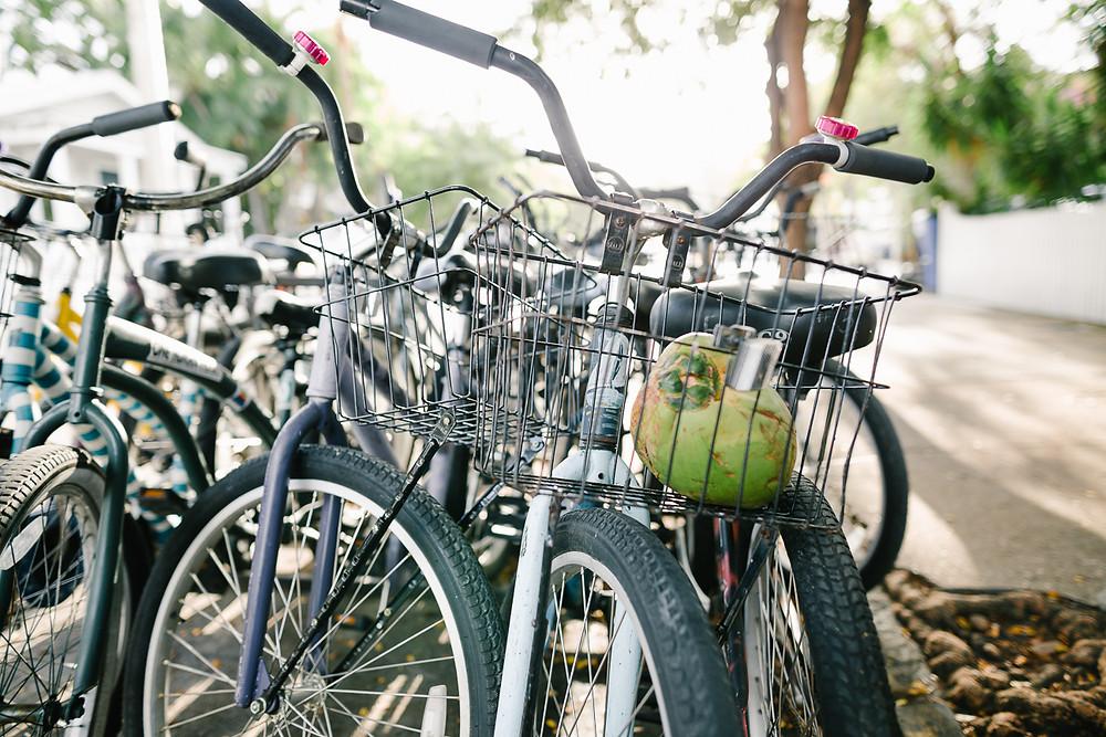 rental bikes from Eden House, Key West, FL