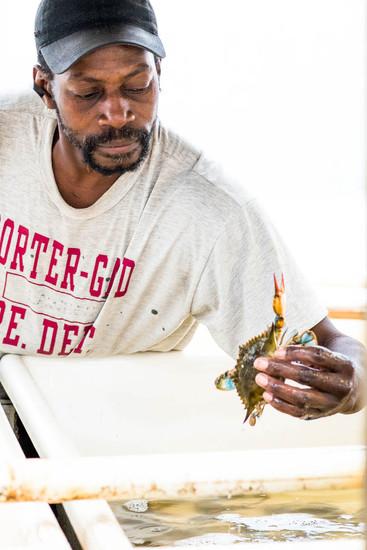 Man-picks-up-blue-crab-in-Charleston-SC_
