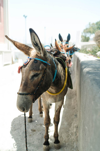 Donkey-in-Oia-Greece_©CameronReynolds-02