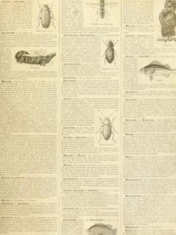 Entomology Dictionary Decoupage