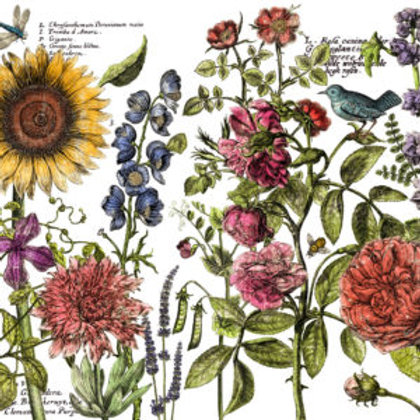 Botanist's Journal Transfer