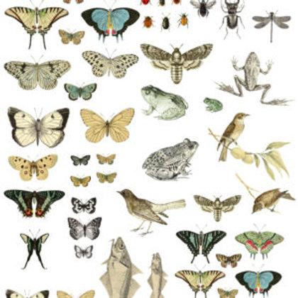 Entomology Transfer