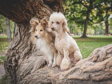 Varga Dávid Fotó | Profi kutya fotózás