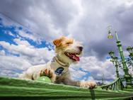 Poppy a kutya