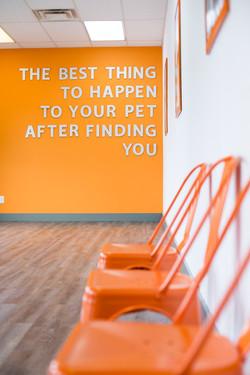 pet groomer, grooming, dog boarding,
