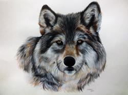 Lonesome Wolf - Brighter