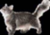 cat_03b.png