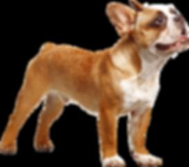 dog_01.png