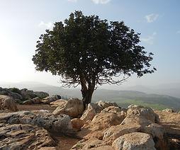 tree-189158.jpg