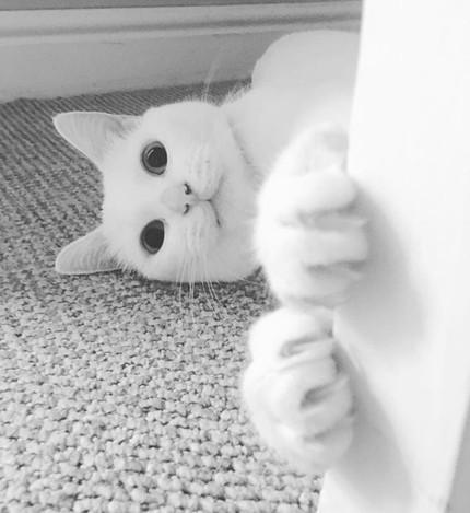 moopcat.jpg