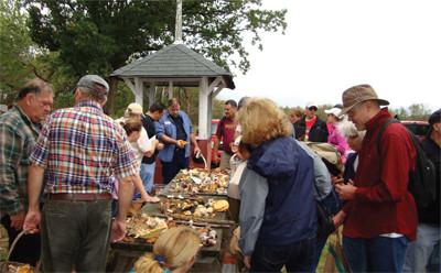 Boston Mycological Club Mushroom Walk - September 12th