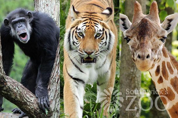 zoo image for website.jpg