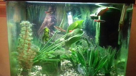 Fantasic Fish!