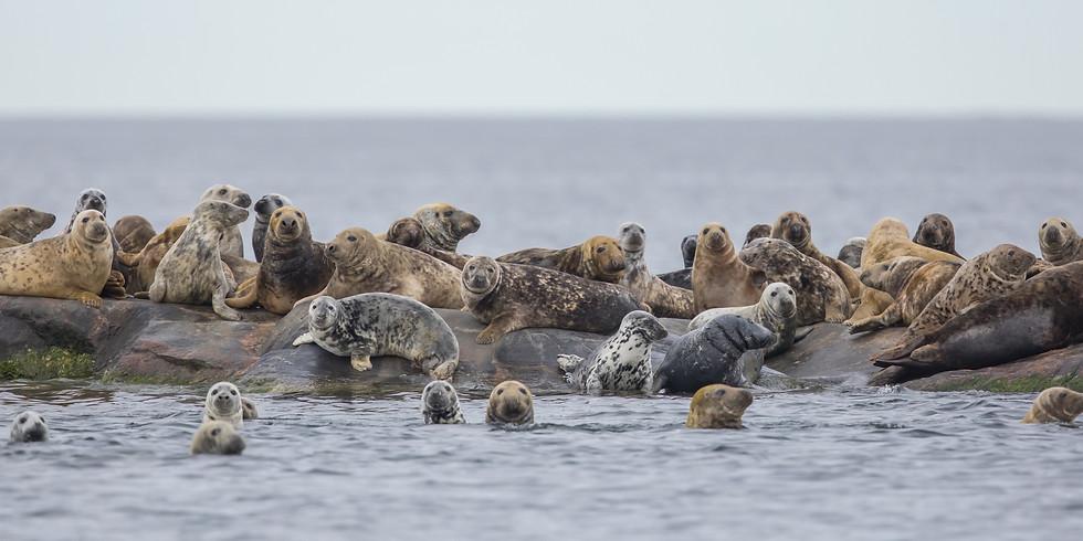 Itämeren hylkeet: kannan kehitys ja säätely