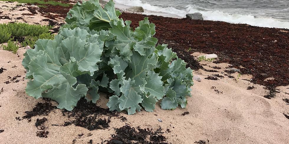 Saariston kiehtovat kasvit